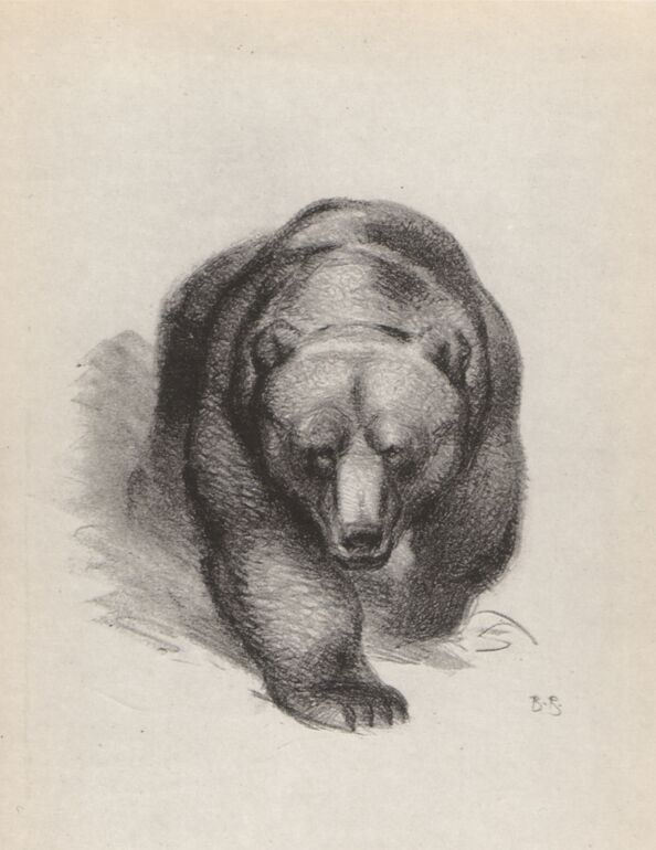 Russian art. Vasily Alekseyevich Vatagin. The Bear